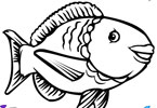 Igra Riba Bojanje Igrica - Igrice Bojanja Igre Bojanka za Djecu